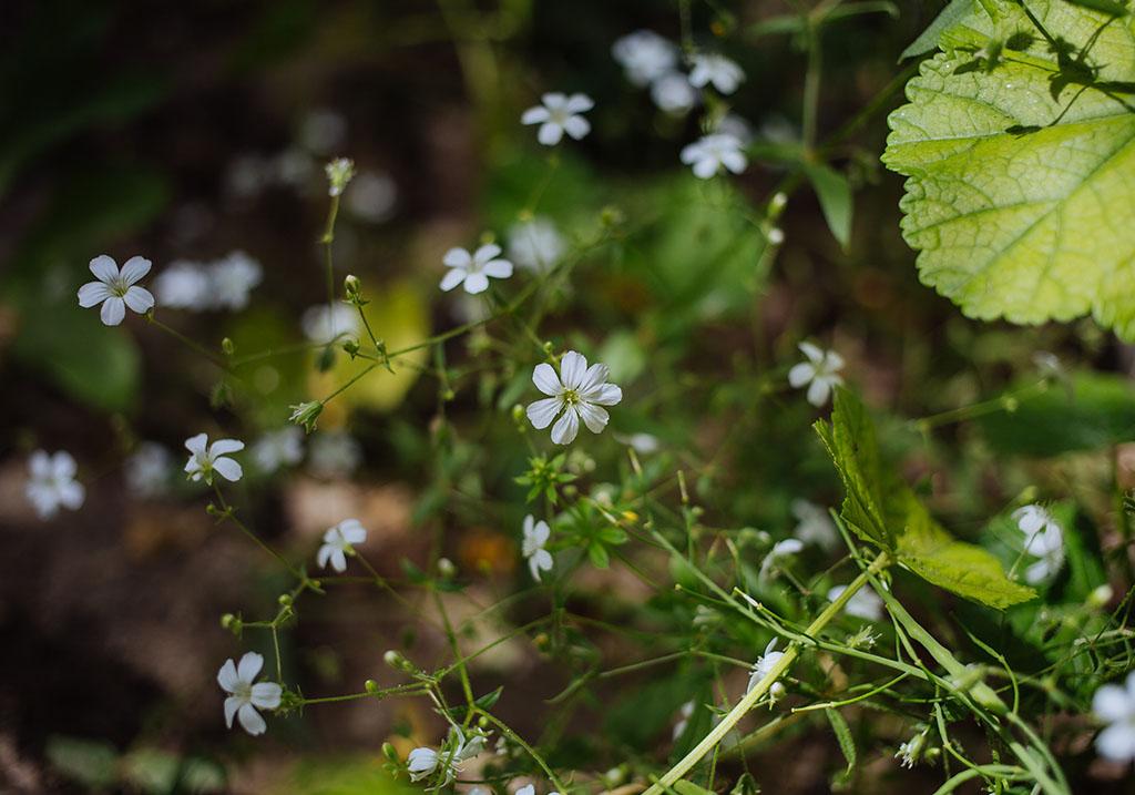 Herb garden at the Sarai